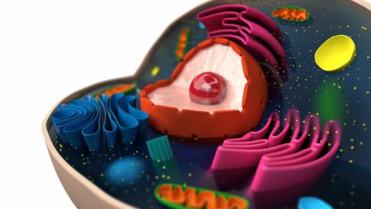 Eukaryotic evolution cell (iStock)