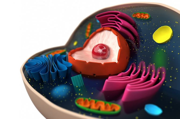 Eukaryotic evolution cell (iStock)